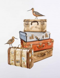 Travel-is-our-life-and-we-love-these-so-much-Bartailed-Godwit-Vintage-Suitcases-2015-46-x-61-cm-watercolour